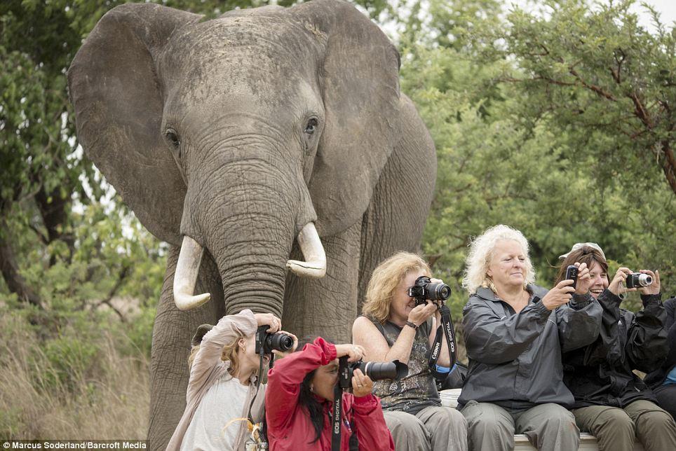 а слона не заметили