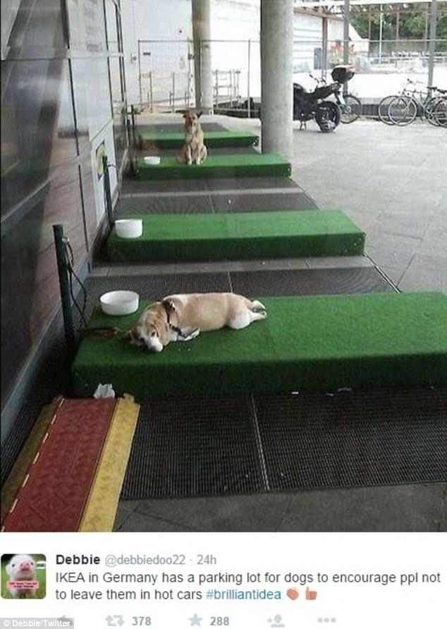 парковка для собак в Икее