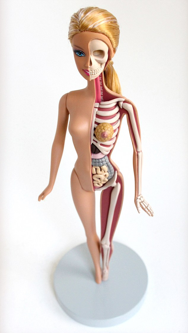 кукла барби изнутри - неправильные пропорции тела