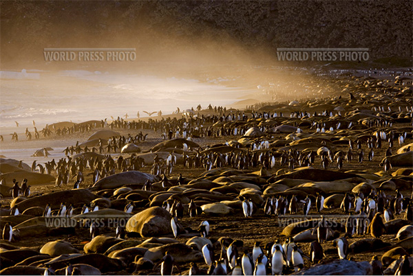 пингвины - лучшее фото