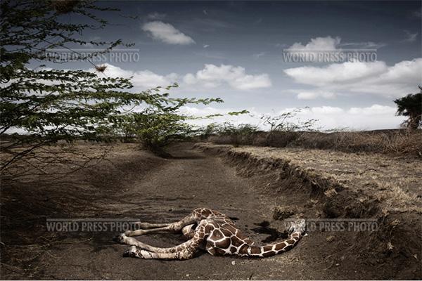 мертвый жираф - лучшее фото