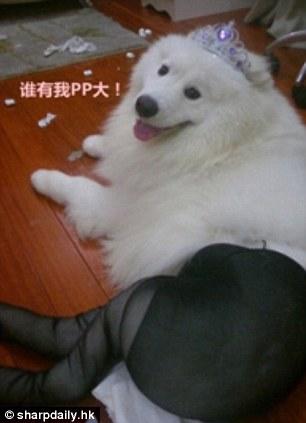 нвоая мода в Китае - собаки в эротичных колготках