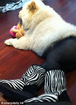 нвоая мода в Китае - собаки в колготках