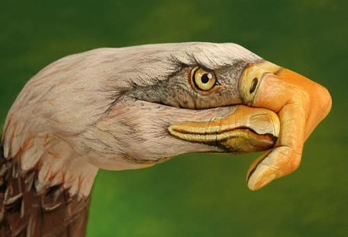 птица с клювом