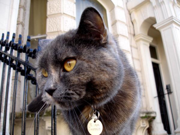 london cat