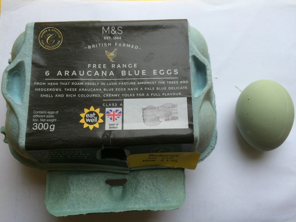 blue-eggs-Jan2019